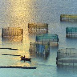 Sunset Crab Nets