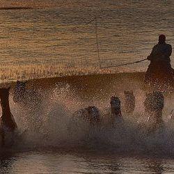 Horses galloping Inner Mongolia