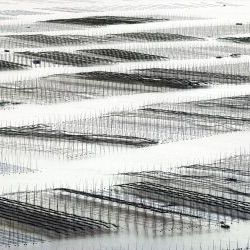 Broidery Bamboos  Seaweed Farms