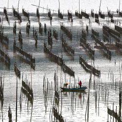 Sea Food Farms