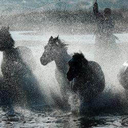 Horses Riding  Inner Mongolia